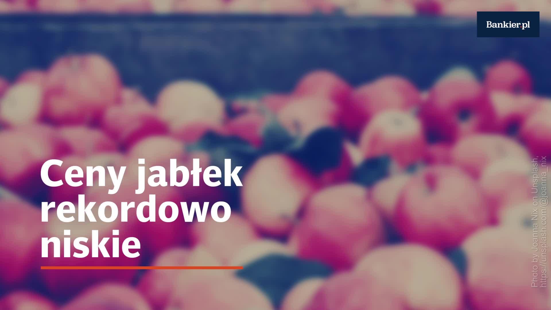 Sadownikom nie opłaca się zrywać jabłek?